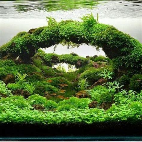 aquascape plants for sale best 25 nano aquarium ideas on pinterest nano tank