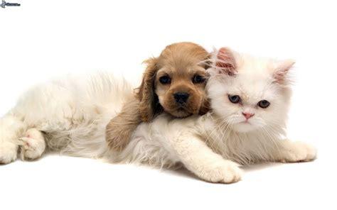 fotos animales juntos fotos de perros y gatos juntos fotos de perros