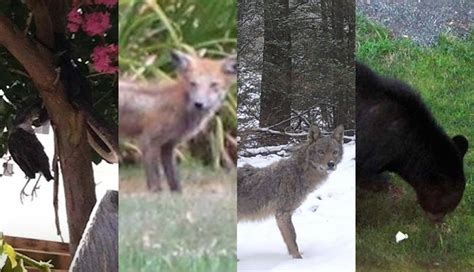 weird pa  nj animal sightings  power ranking