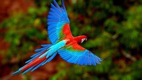 beautiful small birds wallpapers entertainment only flying birds wallpapers entertainment only