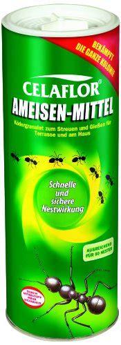 Gegen Ameisen Im Rasen 3020 by Tischplatte Beton Selber Machen Carprola For