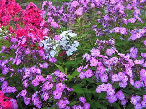 Garden Wiki Gardening Simple The Free Encyclopedia