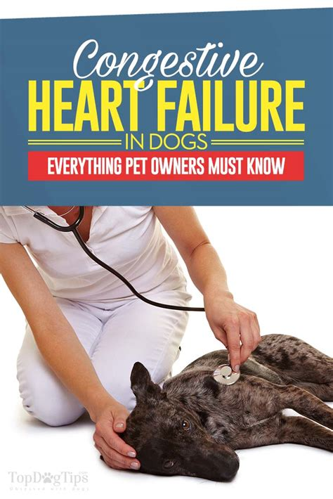 failure in dogs congestive failure in dogs 10 things you should do couture country