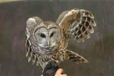 wisconsin owls identification ssfp owls to wisconsin masha vodyanik
