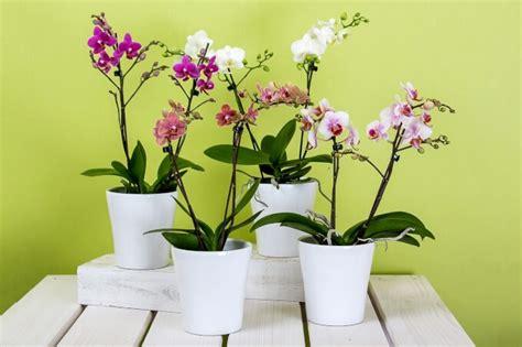 vasi d arredo per interni vasi come abbellire gli spazi con stile homehome
