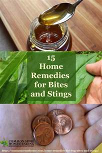 home remedies for insect bites 15 home remedies for bug bites and stings for mosquito