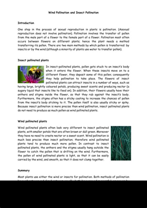Pollination Worksheet Ks2 by Wind Pollination And Insect Pollination Ks2 Lesson Plan