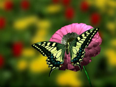 images of beautiful flowers 50 beautiful flower wallpaper images for
