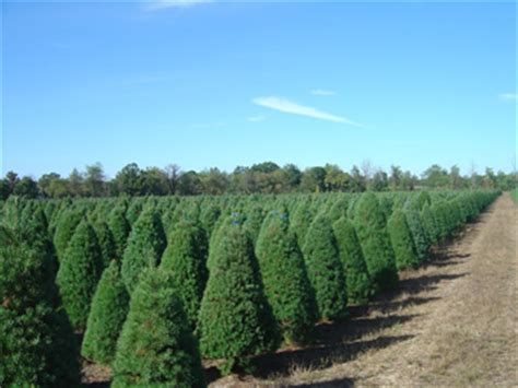 christmas tree farms in southeast michigan great lakes tree farms the pride of michigan grown trees
