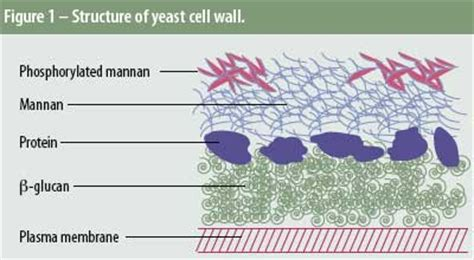 allaboutfeed application  yeast cell wall  swine
