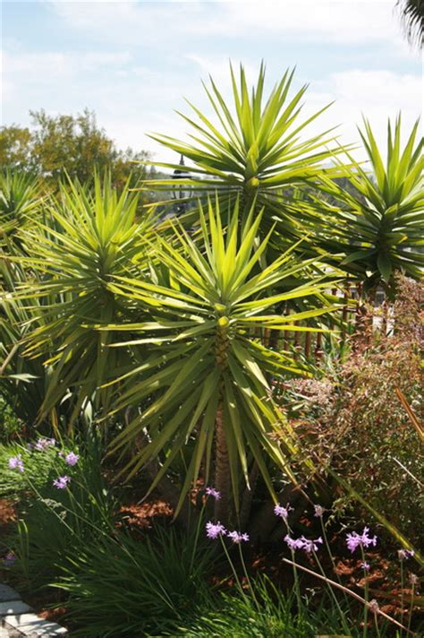 tropical plants san diego plants tropical landscape san diego by terre