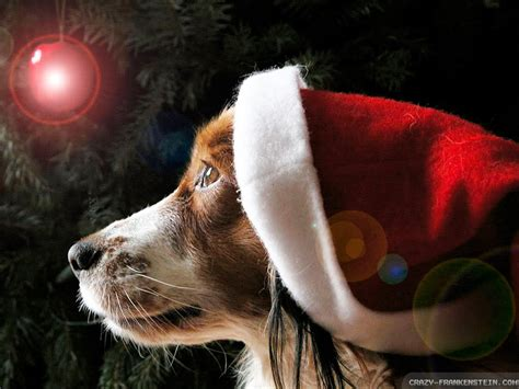 christmas wallpaper with dogs daniel sierra christmas puppies hd wallpapers