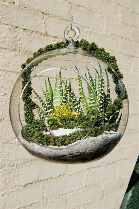 aliexpress buy 3pcs lot air plant glass terrariums
