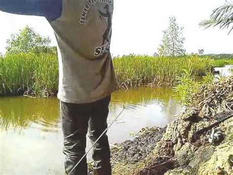 Pakan Ikan Lele Buat Lomba mancing mujaer doovi
