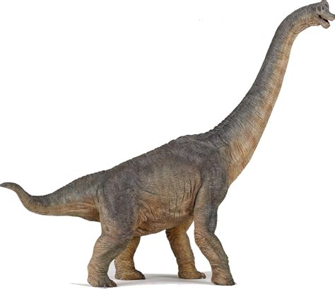 google images dinosaurs brachiosaurus google search dinosaurs pinterest
