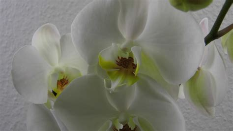 Orchideen Deko Ideen by Orchideen Im Glas Deko Ideen Mit Flora Shop