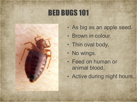 how long do bed bugs live after spraying a short guide to bed bugs