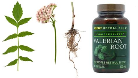 valerian root for dogs valerian root side effects interactions liver dogs tea capsules 450mg
