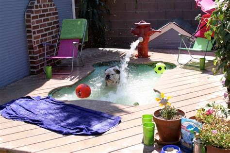 backyard dog pool build a diy dog pool to keep your pup cool healthy paws