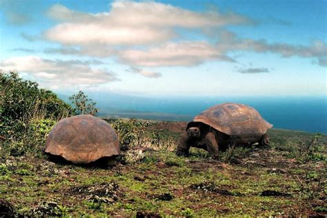 7 Amazing Animals From The Galapagos Islands by Animals Galapagos Island Photos