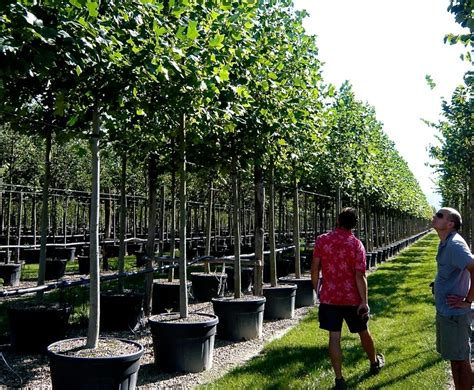 buying container grown trees jo alderson phillips