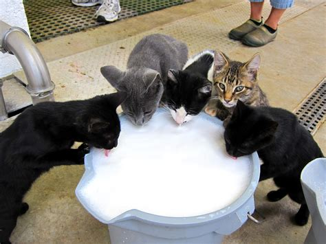 when do puppies stop milk why do cats like milk cats