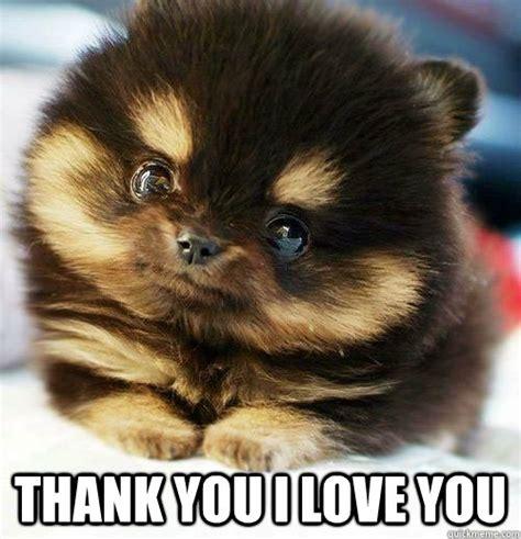 Cute Love Memes - thank you i love you brainlessly cute quickmeme