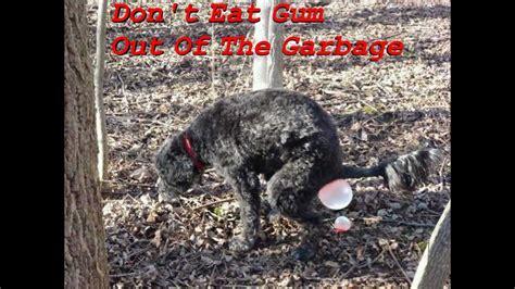 eats gum