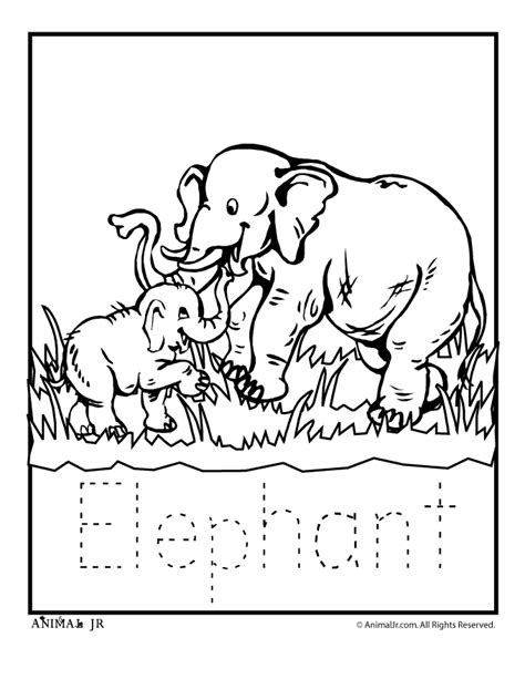 zoo animal coloring pages zoo animal templates az coloring pages