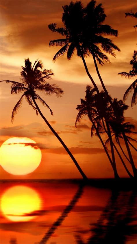 wallpaper beautiful tropical sunset palm trees sea