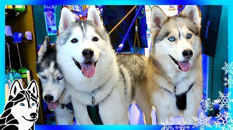 puppies at petco dogs go shopping at petco bravecto flea