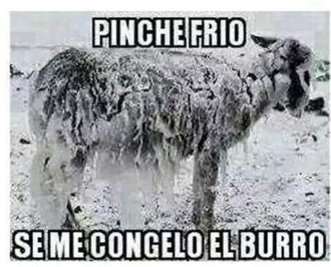imagenes memes sobre el frio 17 best images about frio on pinterest funny facebook