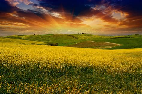 best image welcome to tuscan muse tuscan muse