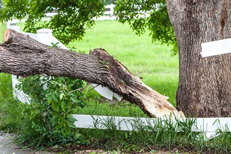 my neighbor s tree fell what happens if my neighbor s tree falls on my fence hercules fence newport news