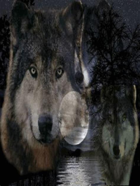 imagenes animal espiritual lobo t 211 tem totemanimal