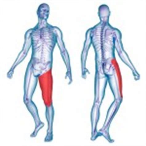 linfonodi interno coscia la cruralgia