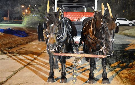 christmas light carriage rides st louis animal rights group plans protest at popular holiday light