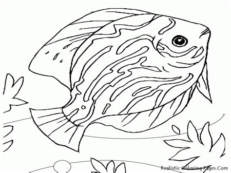 Coloring Page Fish Bowl by Fish Bowl Coloring Pages Coloring Home