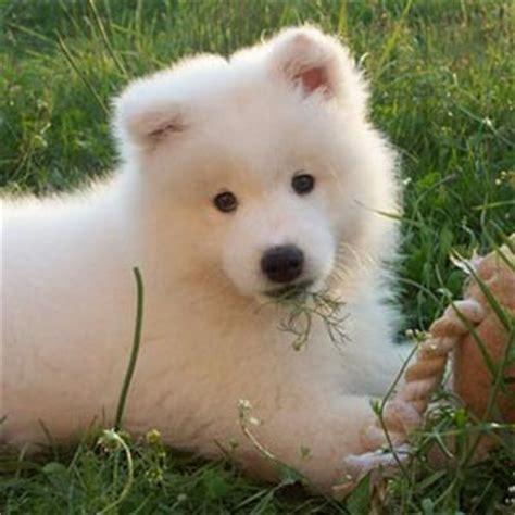 imagenes de animales juguetones ficha de peluchin un perro de ceferino perros com