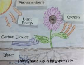 Gifts For Architecture Students by Photosynthesis On Pinterest Mitosis Ap Biology And