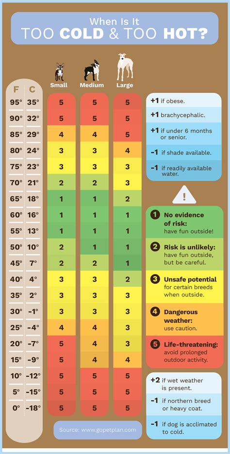 what temperature is cold for dogs 5 random hazards for fed dogs keep the wagging