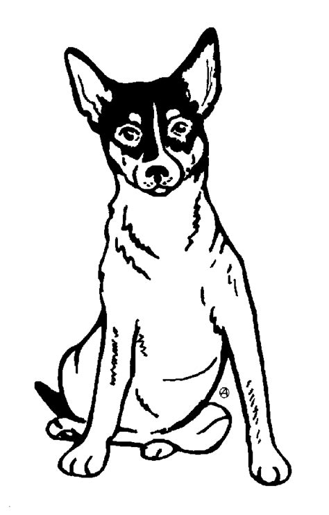 rat terrier coloring page order a personalized pet memorial stone