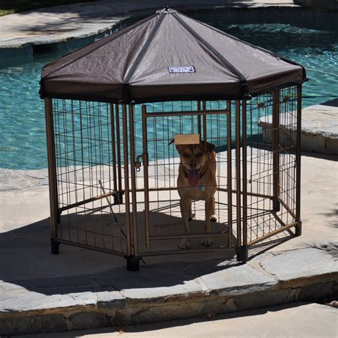 pet gazebo advantek original pet gazebo small kennels at hayneedle