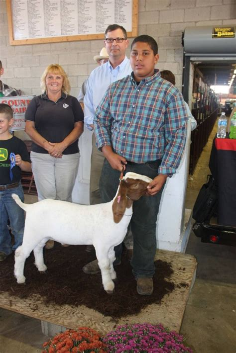 western reserve insurance wayne county fair sale results 2015 farm and dairy