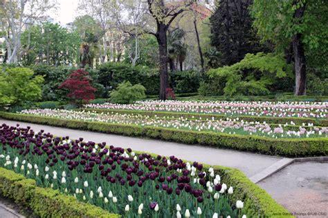 real jardin botanico tulipanes en el real jard 237 n bot 225 nico de madrid