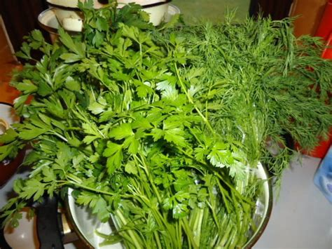 can dogs eat parsley dill parsley and lovage the most used herbs in the cuisine dave s garden