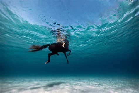 Stunning Water Photography stunning underwater photography enric adrian gener