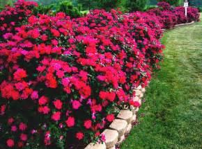 Ballard Design Ottoman 28 free flower garden ideas photograph outdoor