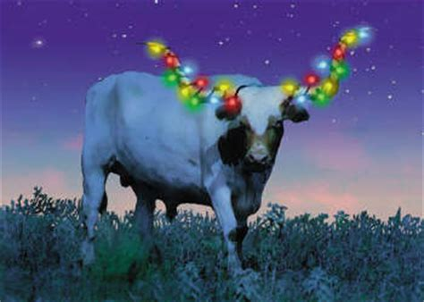 christmas cards texas longhorn with lights
