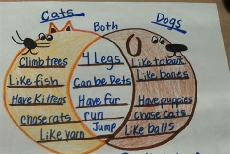 Compare And Contrast Essay Cats And Dogs by Venn Diagram Of Cats Dogs Ideas For A Elementary Class Cats